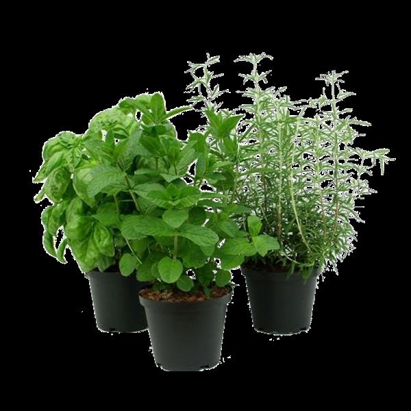 Začinske biljke mix fi13-4